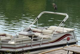 Heron On Pontoon June 2014